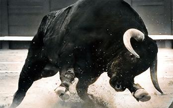 A T'd Off Bull